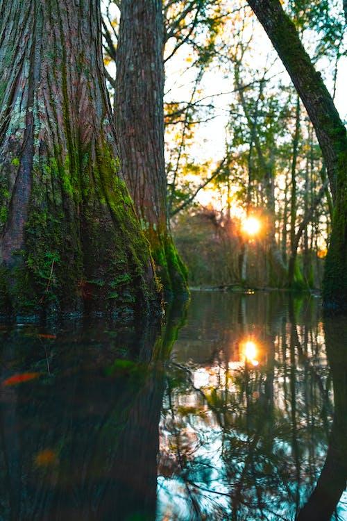 Безкоштовне стокове фото на тему «4 к фону, amazon, болото»