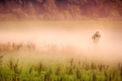 Free stock photo of foggy morning, haze, landscape