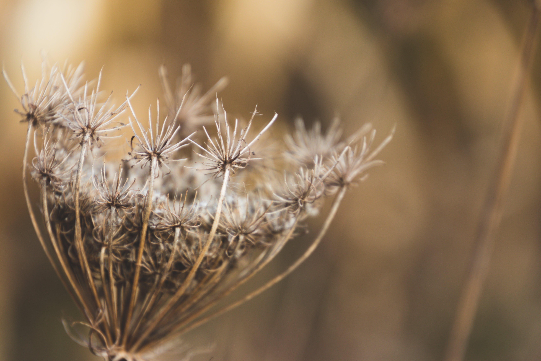Shallow Focus Photography of White Boneset Flower