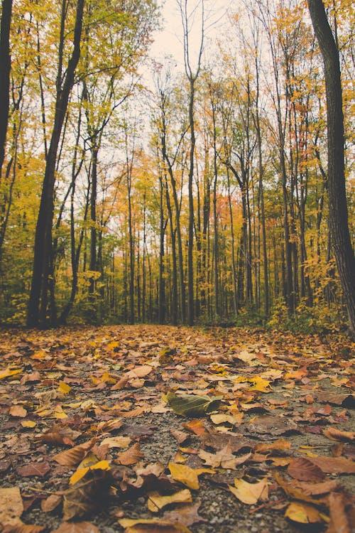 Immagine gratuita di percorso, percorso a piedi, prospettiva