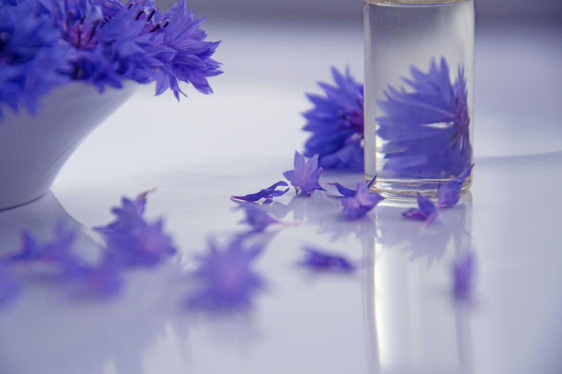 Photography of Purple Flowers