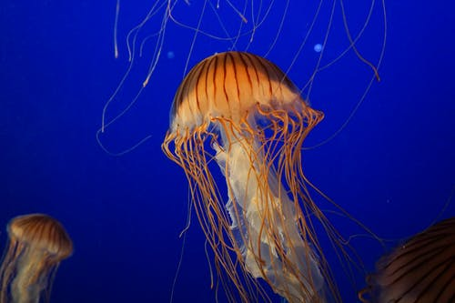 Orange and White Jellyfish Close-up Photography