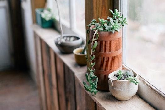Free stock photo of flowerpots, window-sill