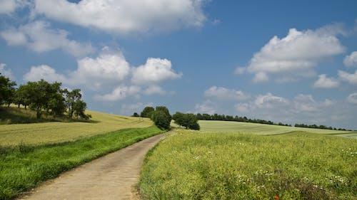 Бесплатное стоковое фото с деревья, дорога, небо, облака