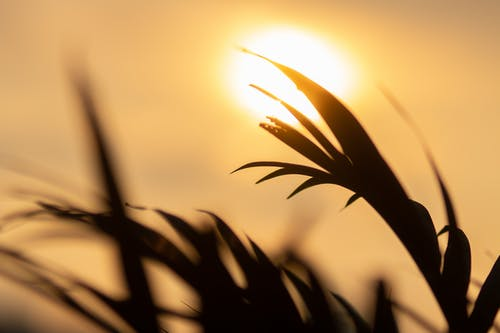 Leaves of fresh grass growing in field in bright sunlight under cloudless tranquil sky in soft focus