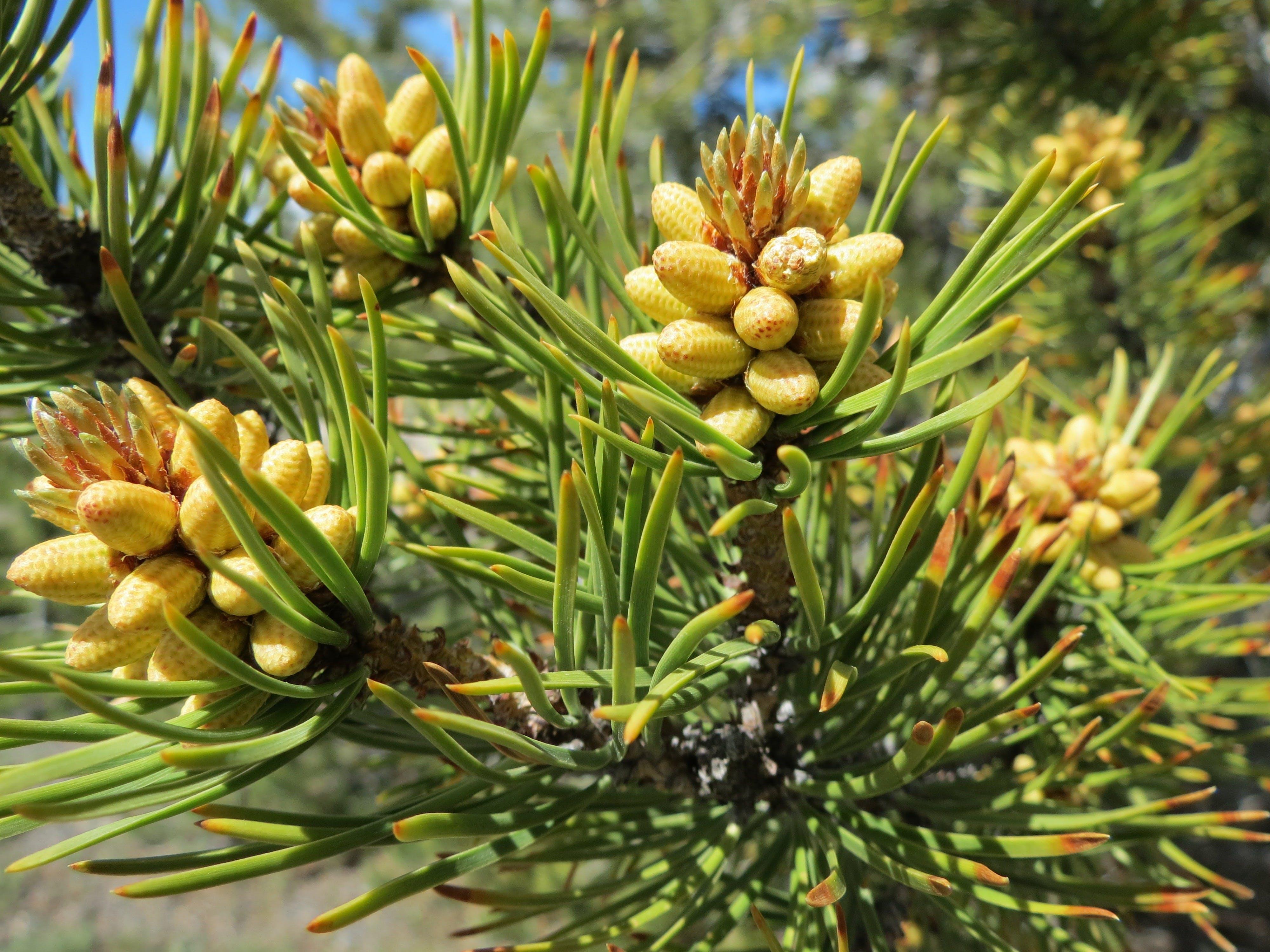 Yellow Green Plant
