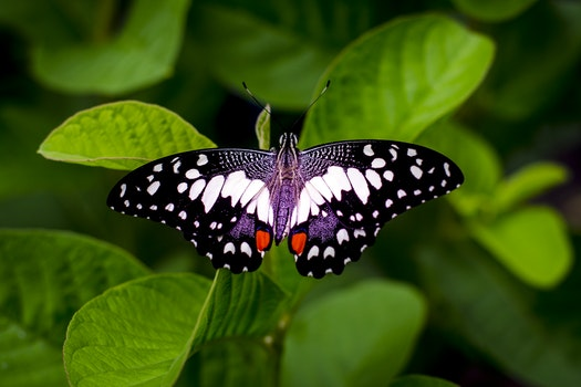 Close-up Photography of a Butterfly