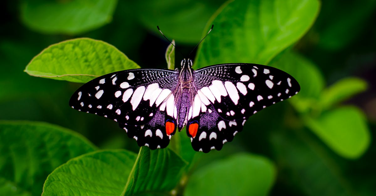 Close-up Photography of a Butterfly · Free Stock Photo