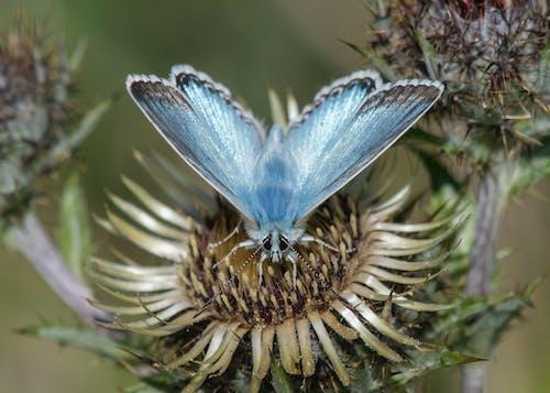 Foto d'estoc gratuïta de papallona sobre una flor