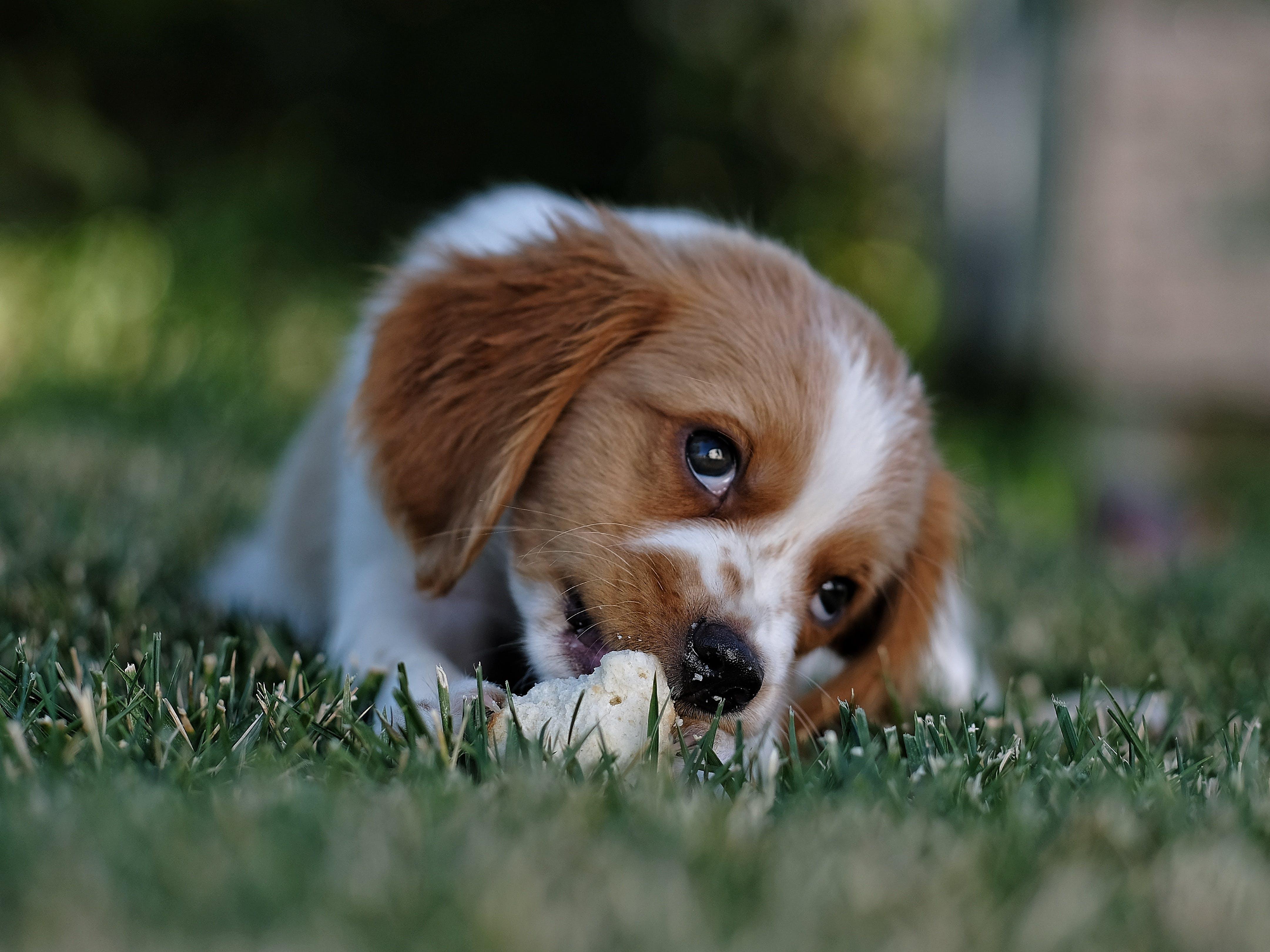 かわいらしい, ぼかし, フォーカス, ペットの無料の写真素材