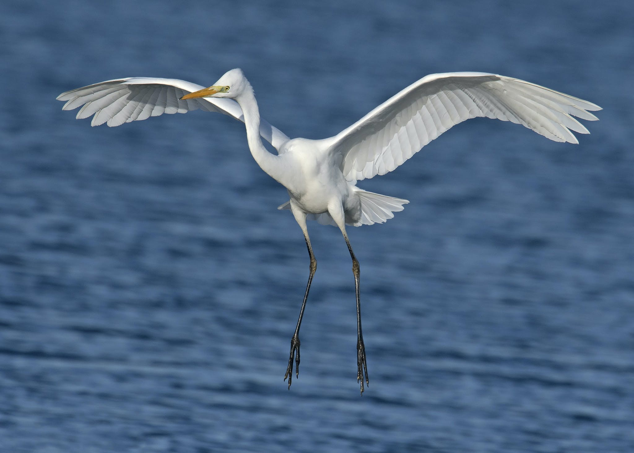 Close-up Photography of a White Egret