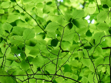 Close Up Photo of Green Leaves