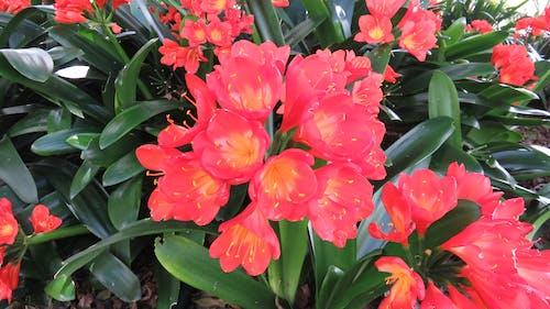 Free stock photo of beautiful flowers, garden