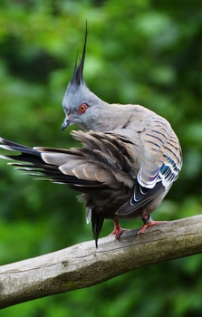 Free stock photo of bird, animal, branch, close-up