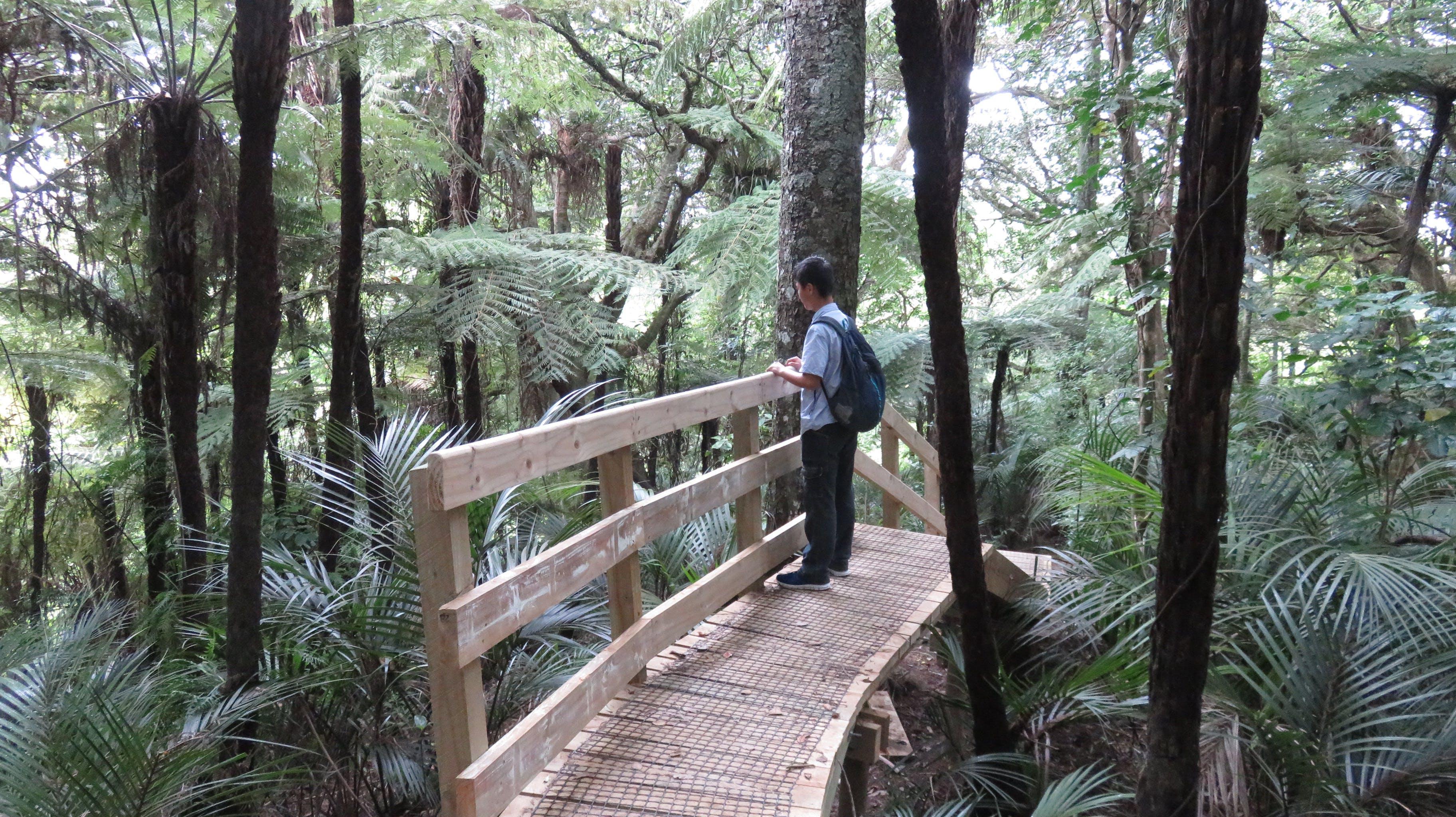 경치, 나무 몸통, 나뭇잎, 남성의 무료 스톡 사진