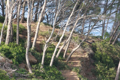 山, 森林, 樹木, 海 的 免费素材照片