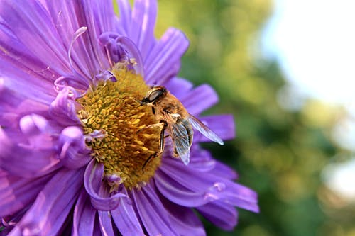 Macro Photography of Bee on a Flower