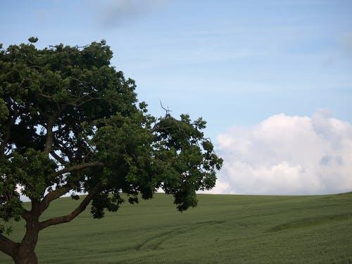 壁紙, 夏天, 樹, 綠色 的 免費圖庫相片