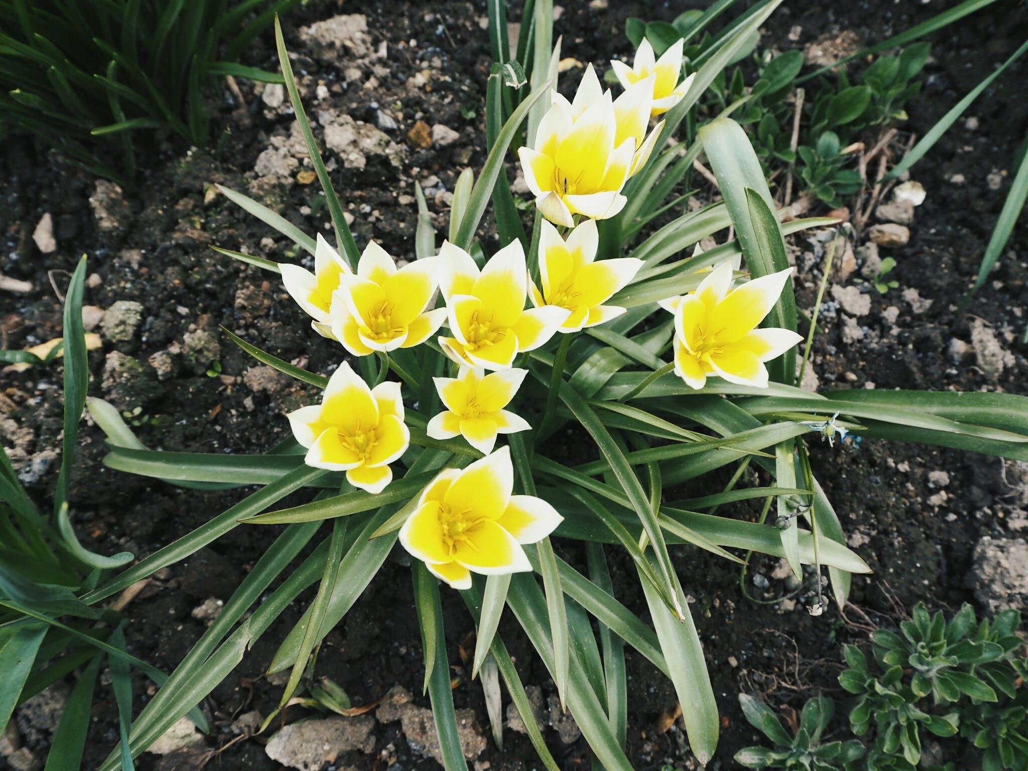 Kostenloses Stock Foto zu blume, gelb, gelbe blume, natur