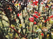 food, nature, red