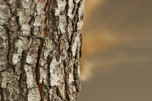 Free stock photo of tree, wood, wooden texture