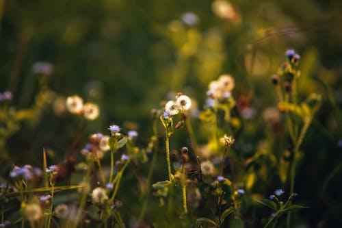 Gentle booming wildflowers growing on grassy meadow