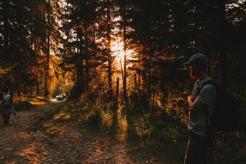 Side view of unrecognizable male traveler in casual clothes standing in woods looking at trees and admiring of forest