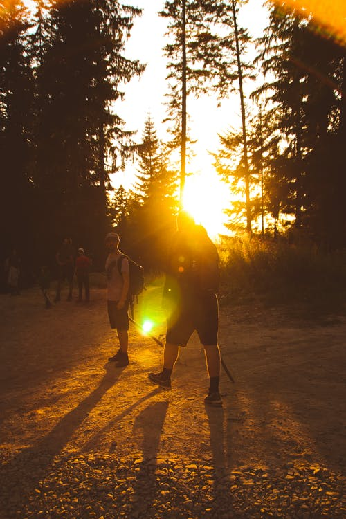 Unrecognizable travelers hiking with sticks for walking near trees at sundown in woodland
