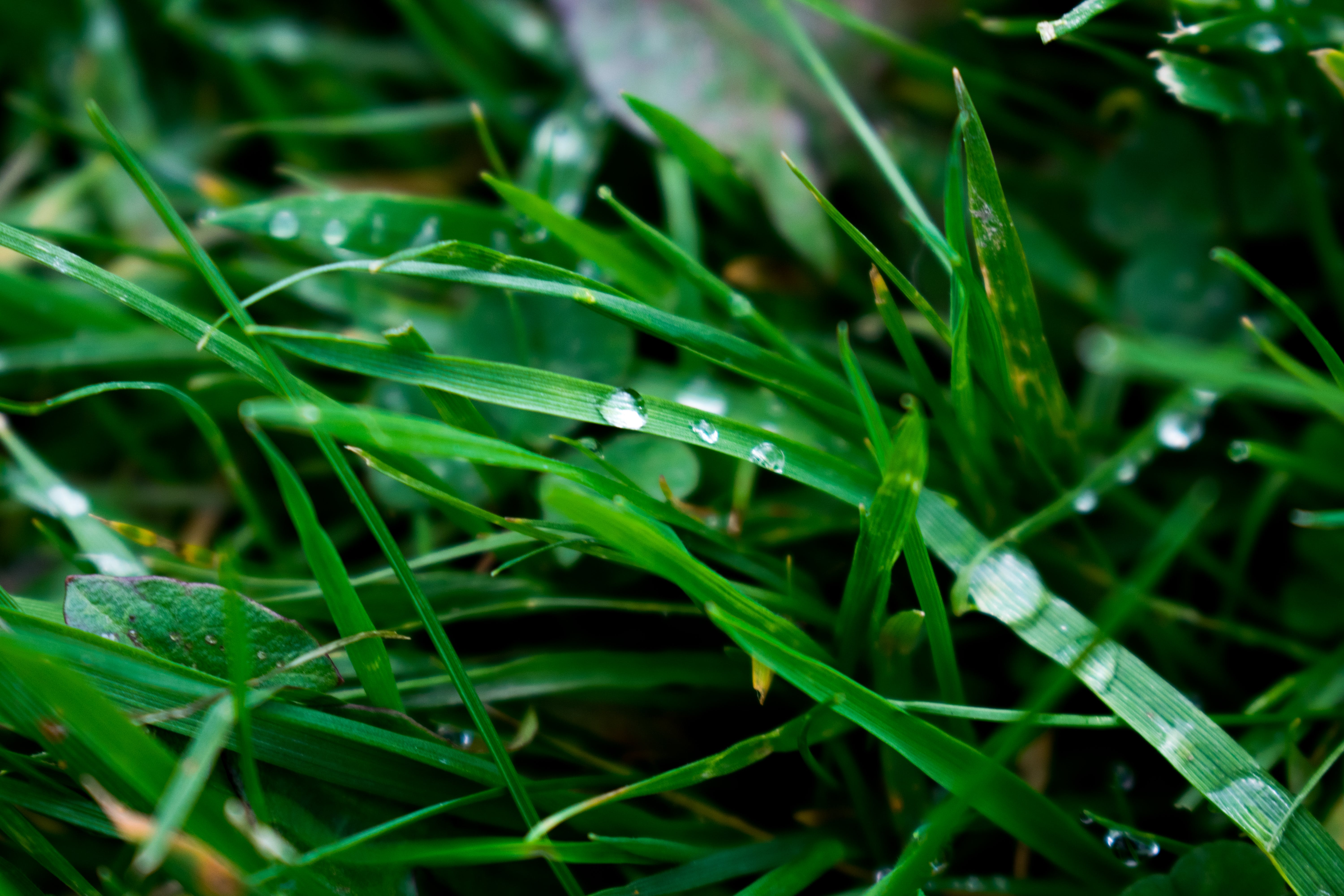 Macro Photography of Blade of Grass