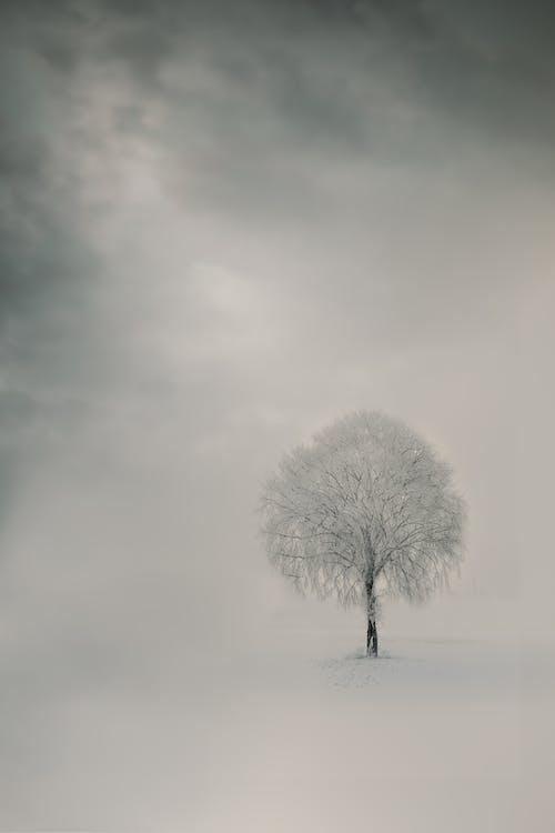 Gratis stockfoto met afzondering, alleen, boom
