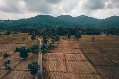 Drone view of lush tropical trees growing near agricultural fields in surrounded by green mountains under overcast sky