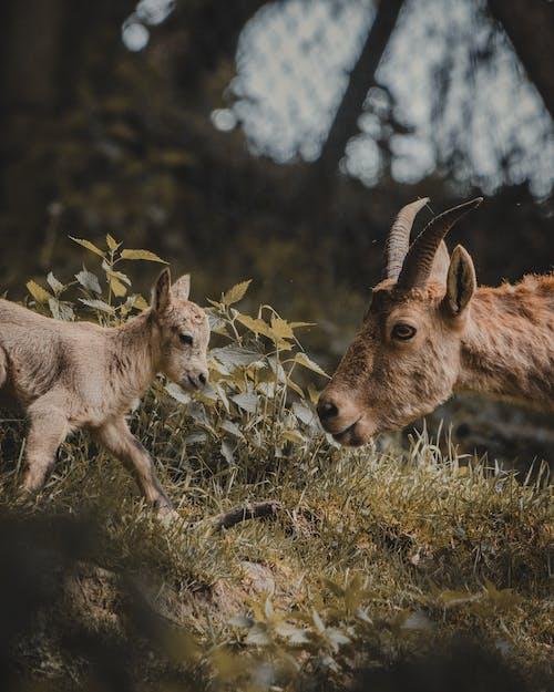 가축, 겨울, 귀여운의 무료 스톡 사진