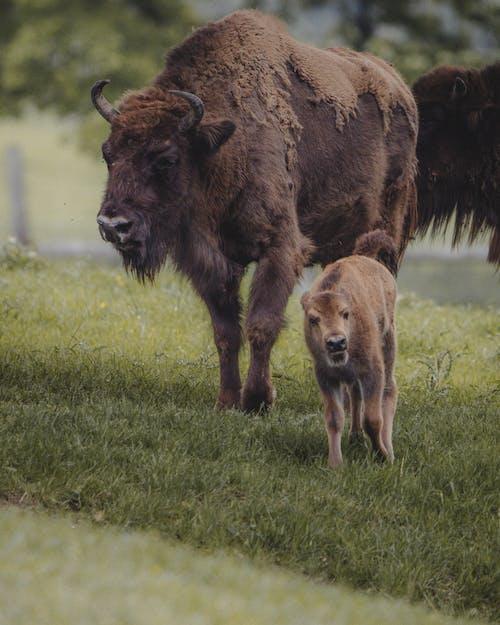 가축, 건초지, 농장의 무료 스톡 사진