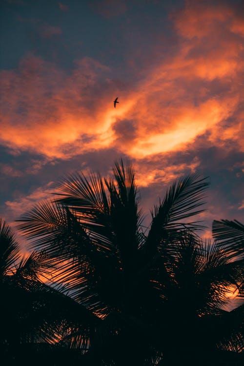 Δωρεάν στοκ φωτογραφιών με απόγευμα, αυγή, δέντρο