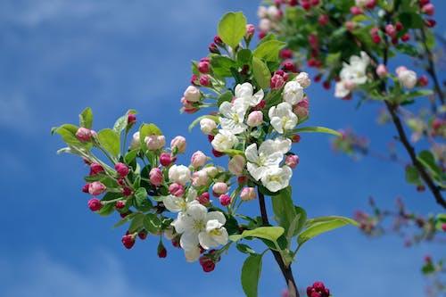 ağaç, bulanıklık, Çiçek açmak, Çiçekler içeren Ücretsiz stok fotoğraf