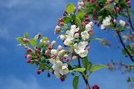 sky, flowers, summer