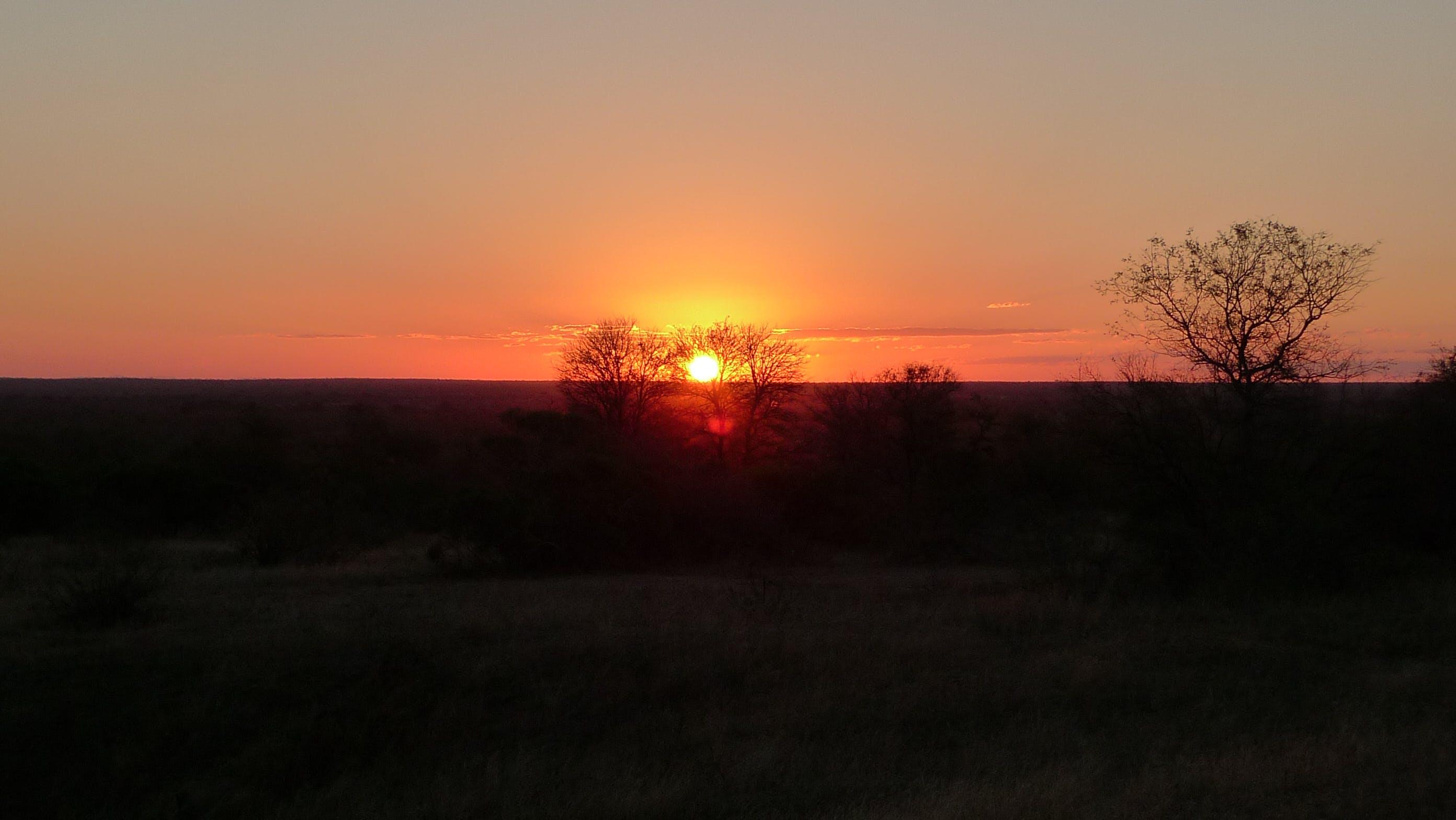 Δωρεάν στοκ φωτογραφιών με απόγευμα, αυγή, γραφικός, δέντρα