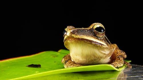 amfibi, hayvan, hayvan fotoğrafçılığı, iribaş içeren Ücretsiz stok fotoğraf