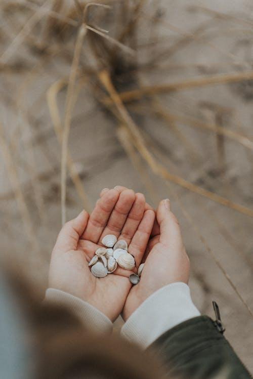 Person Holding Sea Shells