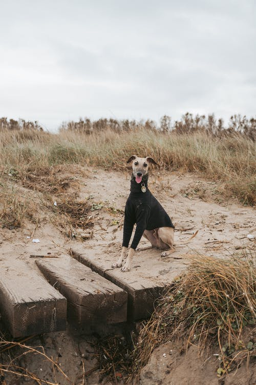 Dog sitting on wooden pier on shore