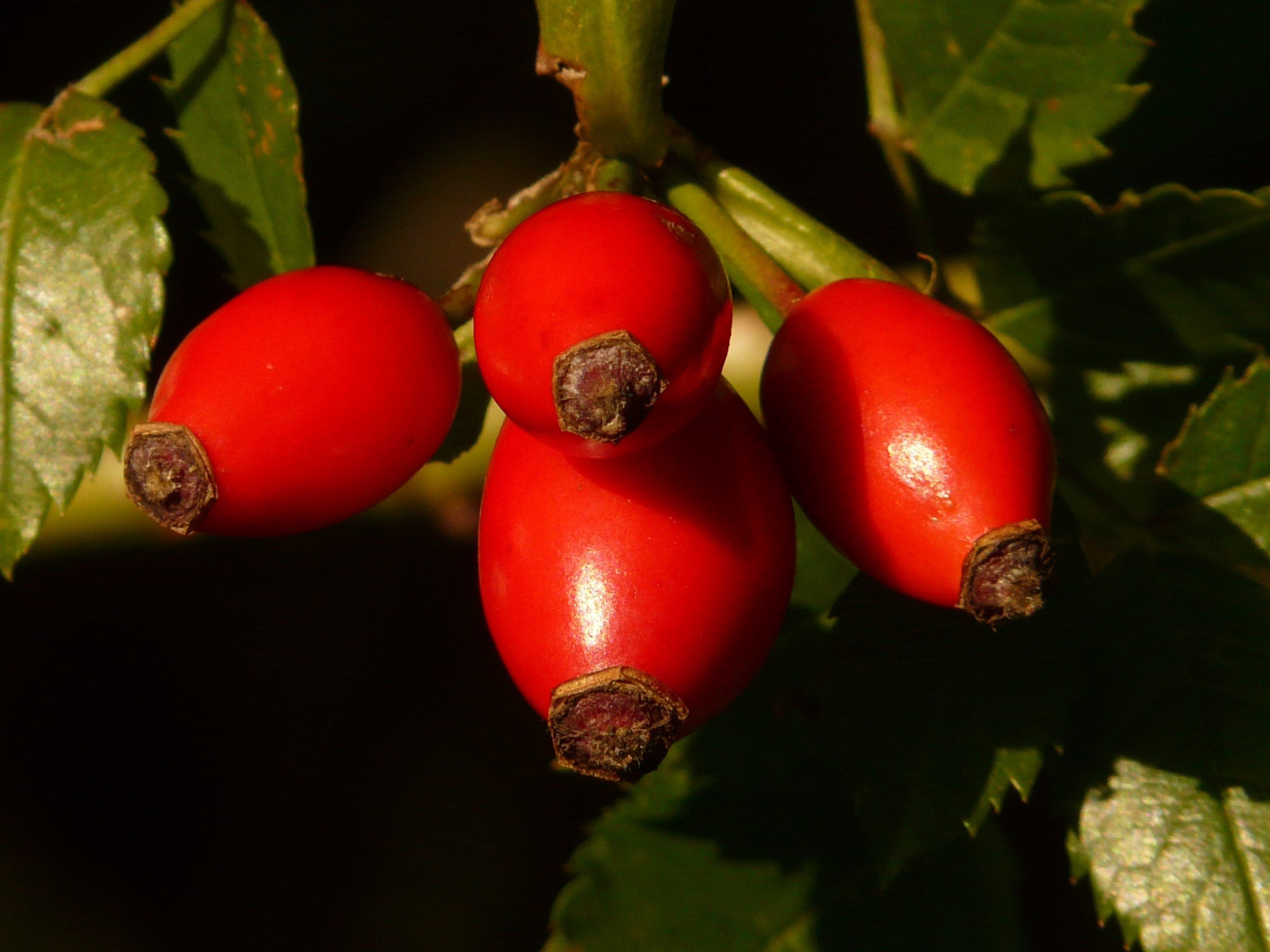4 Red Oval Fruit