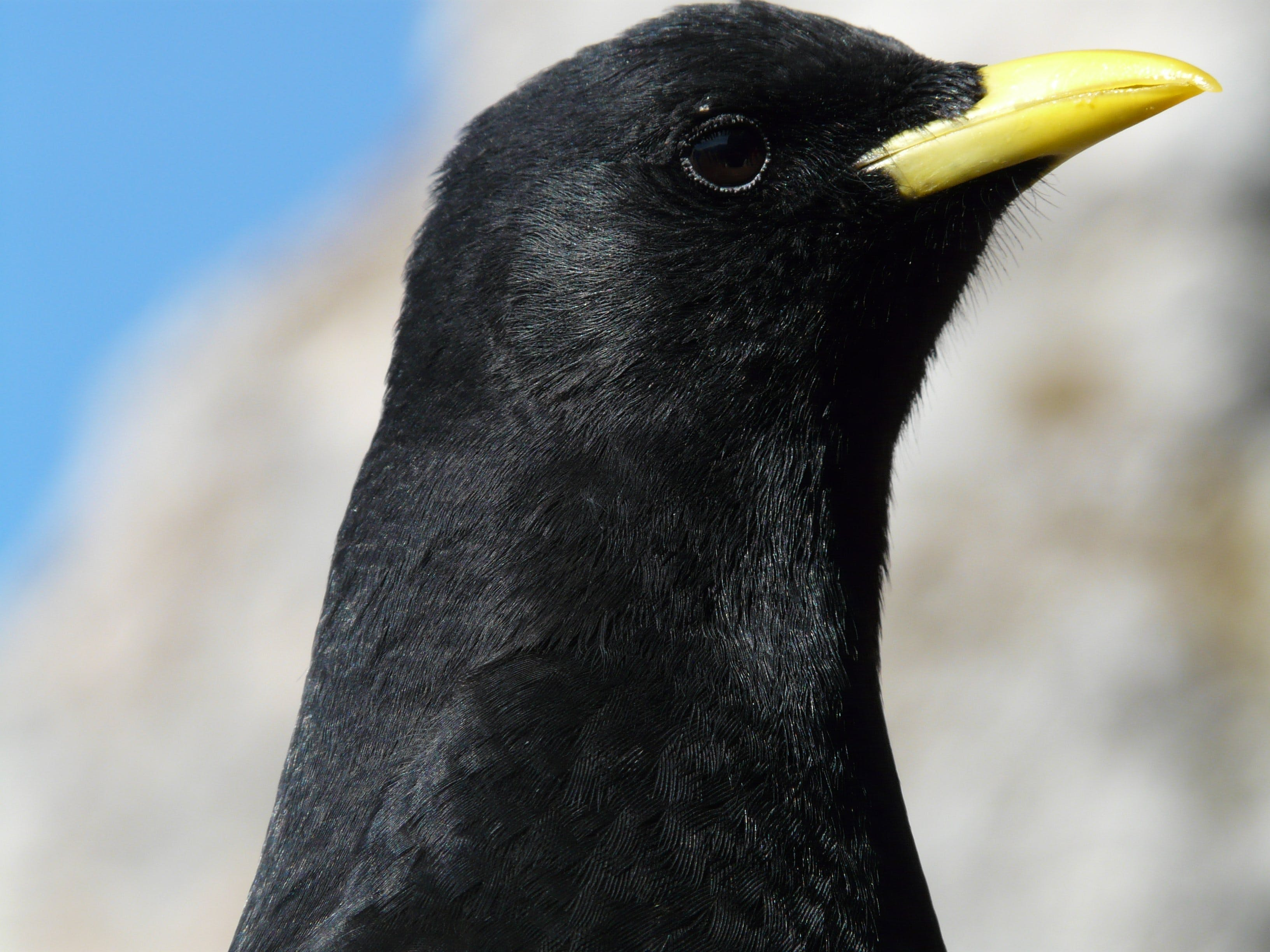 Focus Photography of Black Bird