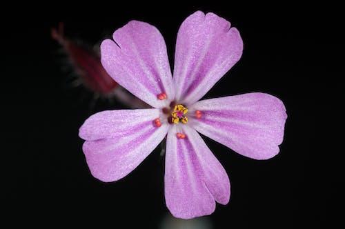 紫5花びらの花