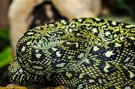animal, reptile, macro
