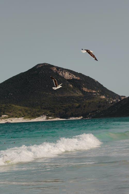 Photos gratuites de action, baie, bord de mer