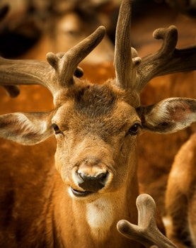 Brown Deer