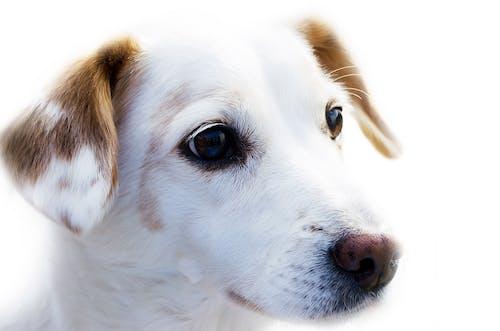 Foto stok gratis anak anjing, anjing, binatang, cute