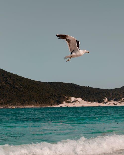 Photos gratuites de bord de mer, côte, eau