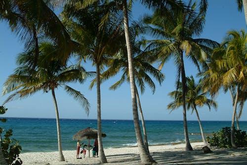 Free stock photo of cuba, playa