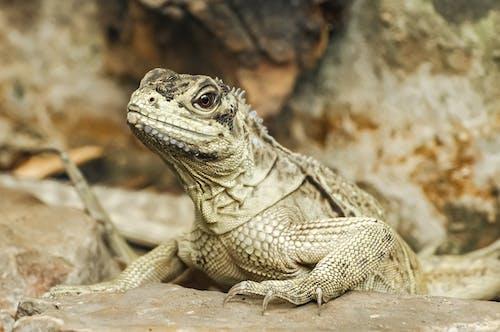 Selective Focus Photo of an Iguana